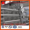 un type cage de poulet de couche pour la ferme avicole