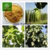 Hops naturel Flower Extract pour Beel /Best Sale Hops Flower Extract Powder, Humulus Lupulus Extract