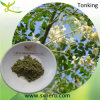 Травяное Medicine для 10:1 Moringa Leaf Powder Depression