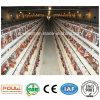 Layer Chicken Cages Système d'alimentation et de boisson automatique