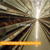 Jaula de batería del pollo en el edificio agrícola de pollo de la estructura de acero del emparedado