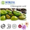 Perdere l'estratto verde puro del chicco di caffè /Green del caffè di Weihgt 50% della polvere acida clorogenica 60% dell'estratto