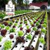 Vermiculita de la agricultura de la horticultura que cultiva un huerto como media Growing