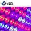LED 5W UV 빨간 파랑은 수경법을%s 램프를 증가한다