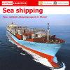 Transporte do frete de mar de Profeshional & serviço logístico do transporte (transporte de FCL/LCL)