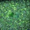 Замороженный прерванный урожай шпината IQF новый