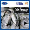 Caixa do congelador dos produtos do projeto do armazenamento frio de quarto frio