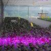 l'usine LED du watt 96W se développent légère, ampoules, panneau stimulent la lampe de croissance pour la feuille
