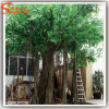 Arbre artificiel en plastique de phase de Ficus d'article truqué à feuilles persistantes
