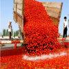 70g a la goma de tomate roja 4500g