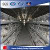 De Kooi van de Vogels van Jinfeng voor verkoopt/Kip Opheffend de Kooien Jaulas Pollos van de Laag