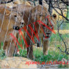Сетка веревочки нержавеющей стали широко использована в сетке льва