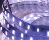 striscia non impermeabile 24V dell'adesivo del nastro di 3m (300LSE) IP20 5630 LED