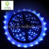 Luce della striscia LED (5m-5050-300SMD-blue)