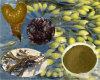 Alga marina de Fucoxanthin