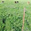 Скотины загородки рельса скотин ограждая панель