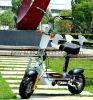 Bici plegable de aluminio del tablero 36V 800W del modelo nuevo, mini vespa eléctrica que practica surf del motor sin cepillo del eje de Evo del neumático del camino