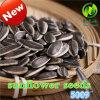 内蒙古の熱い販売のヒマワリの種
