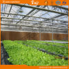 Planting Vegetablesのための高いCost Performance Film Roof Glass Wall Greenhouse