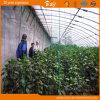 Vegetable Planting를 위한 플라스틱 Film Solar Greenhouse Used