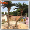 Palmen van de Kokosnoot van Lanscaping de Openlucht Kunstmatige