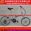 Faltende Fahrrad-moderne Auslegung des Tianjin-Gewinner-20