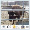 Galvaznied ha spostato la rete fissa file dell'azienda agricola di bestiame del collegare