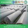 Serre chaude commerciale agricole et commerciale de tunnel en vente