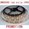 LED 코드 지구 SMD5050 IP65 60LEDs/M