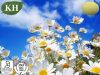 Поставьте выдержку стоцвета 100% естественную