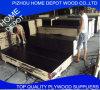 el negro de la madera contrachapada de 12m m Contrustion/Brown/la película roja hicieron frente a la madera contrachapada