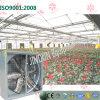 温室を植えている蝶蘭のための軸流れのタイプ冷却ファン
