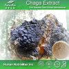 Extracto natural del 100% Chaga (Polysacchrides el 20% el 30% el 40% el 50%, 4:1, 5:1, 10:1, 20: 1)