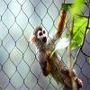 ケーブルの網を囲うステンレス鋼ロープのケーブルによって編まれる動物の動物園