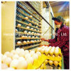 Macchina automatica dell'accumulazione dell'uovo