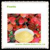 Poudre normale 40%~80% de Fisetin de grande pureté