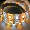 Alto indicatore luminoso di nastro di RGB LED di Doppio-Colore di lumen SMD5050