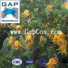 Extrait pur de plante fruitière de bergamote d'approvisionnement de constructeur