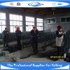 PET knotenloses Fisch-Netz (SDC17851)