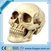 Figurine del cranio della resina del disgaggio della decorazione di Holloween poli