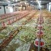 Equipamentos automáticos de alimentadores de aves de capoeira e bebedouros com design gratuito da casa