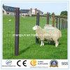 Горячие окунутые гальванизированные загородка лошади/провод овец, дешевые скотины/загородка поля