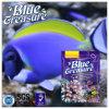 Salzwasser-Aquarium-Fische