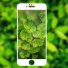 La stampa del Silk-Screen in pieno ha riguardato l'anti protezione dello schermo della graffiatura per il iPhone 7/7 più