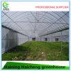Invernadero multi de la película plástica del palmo del bajo costo para la flor y el establecimiento vegetal