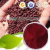 Rood Monascus van het Pigment van de Agent van de Kleur van de Rijst van de Gist Natuurlijk E100 Rood