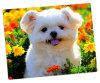 Los paneles de aluminio de la foto para los animales lindos 24  X 26