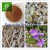 Platycodonのルートエキス、底のPlatycodonisのエキス、Balloonflowerのルートエキス、底Platycodonis P.E、Platycodon Grandiflorum P.E