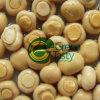 Champiñón entera / rodajas de setas en salmuera de alta calidad