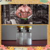 191AA 100개 Iu 인간적인 근육 성장 스테로이드 호르몬
